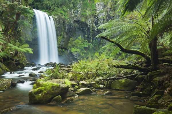 ecosystem of the rain forest Some of the most important trees in the world live in rainforests even though the  nearest rainforest may be a long ways away from you, you still benefit from.